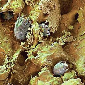 микроорганизмы паразиты животных и человека